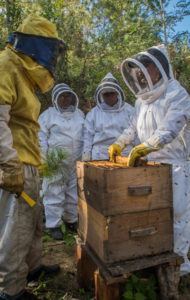 A training workshop in caring for bees. CAFOD's partner in Nicaragua runs a beekeeping project to give women a source of income. They work in a group to care for hives and bees and are then able to sell the honey produced.
