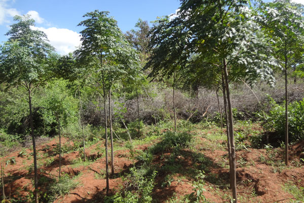 And we have an amazing 3040 brand new trees around the dam site. They will help protect the dam from drying up again.