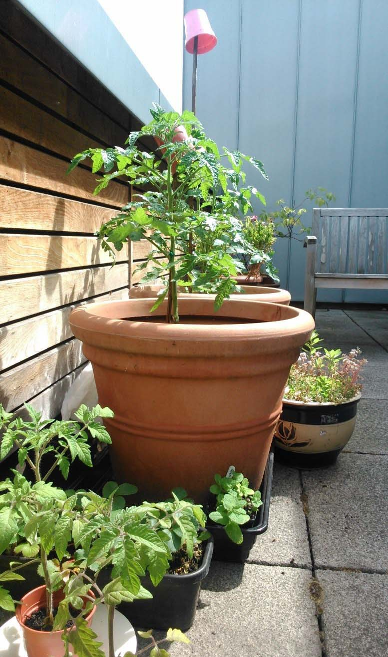 The small, but growing, terrace garden at Romero House