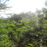 People have so far planted almost 500 additional trees on their own land, which will improve the environment even more.