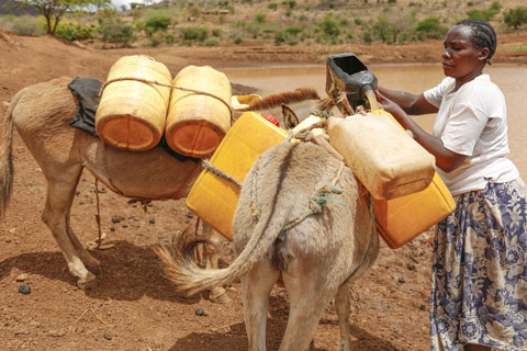 We have installed new troughs for animals, such as these hard-working donkeys, to drink from.