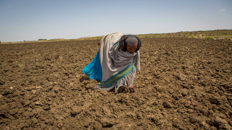 Ethiopia Food Crisis - Herit in her field
