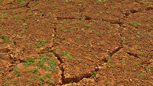 The dry, cracked earth in Kitui