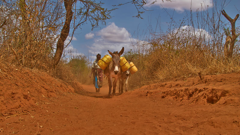 Stella walking to collect water with her donkeys