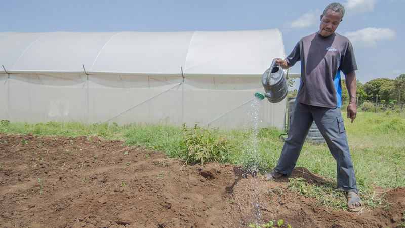 John waters crops beside his greenhouse - Kenya