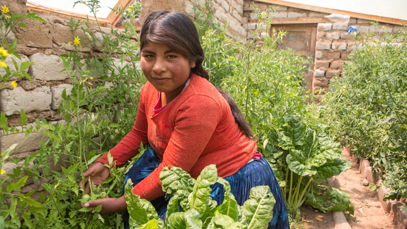 Rebeca tends to tomato plants in the greenhouse her family built with CAFOD's partner