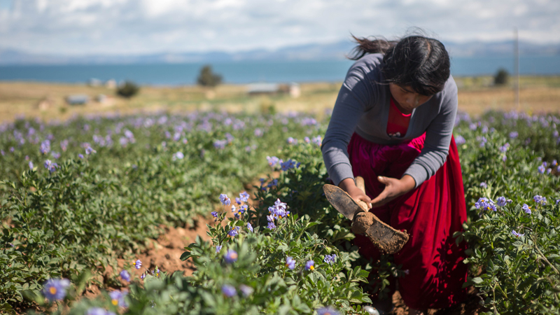 Rebeca has learnt vital farming skills from CAFOD's partner CIPCA in Bolivia
