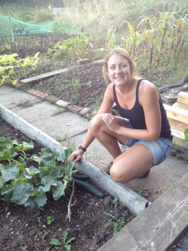 Laura picking cucumbers on her allotment
