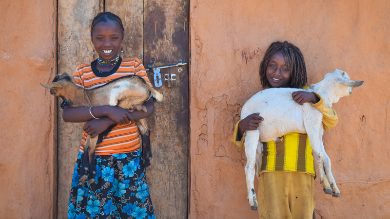 World Gift goat kids in Ethiopia