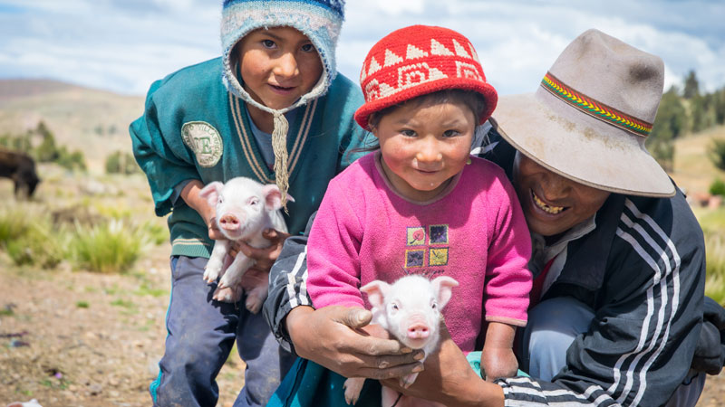 Bernardo with his children and their piglets, Bolivia