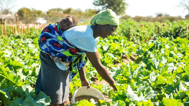 Community vegetable garden in Marian's village, Zimbabwe