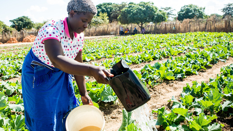 Vegetable gardens can provide nutritious food for a whole community