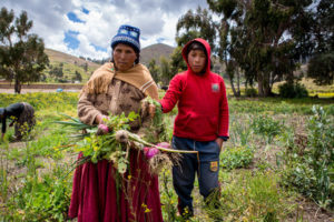 Nicanora's vegetable garden is growing so well that she is now able to sell some of her surplus crops at the local market in La Paz.