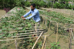 Jamal Hossain growing pointed gourd using vermi compost and herbal pesticides