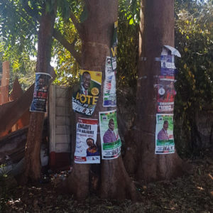 Trees in Zimbabwe covered in election posters