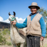 Help a llama farmer to keep his llama happy and well fed all year