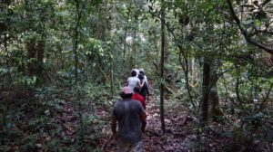 A group of people walking through trees in the Amazon region of Brazil