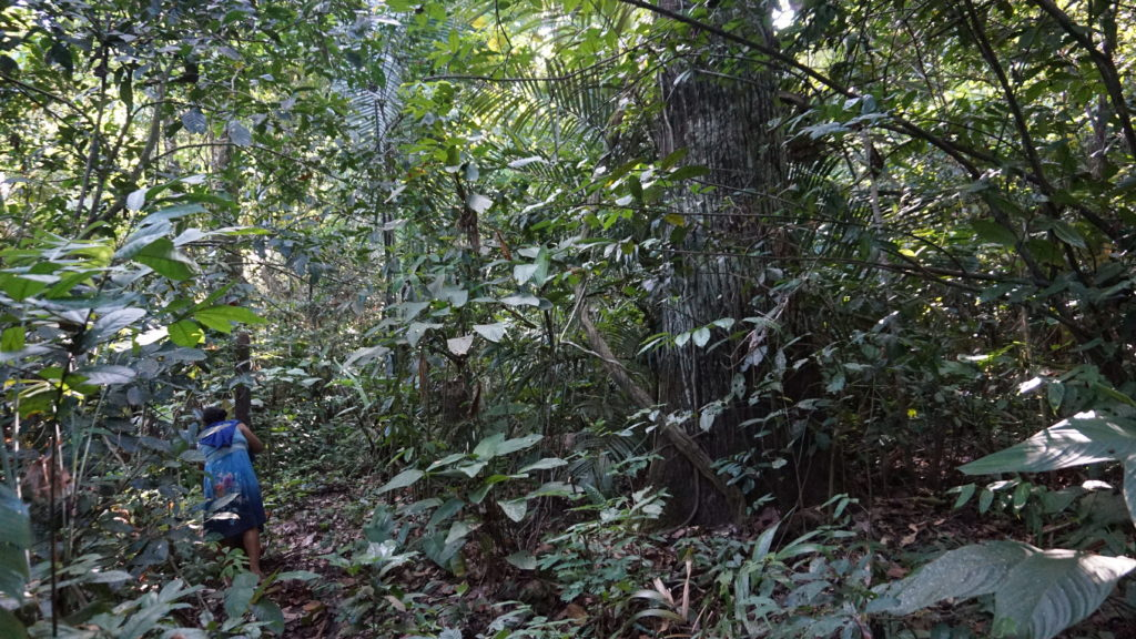 Dona Maria stands in the Amazon rainforest in Brazil.