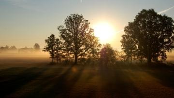 Sunrise above trees