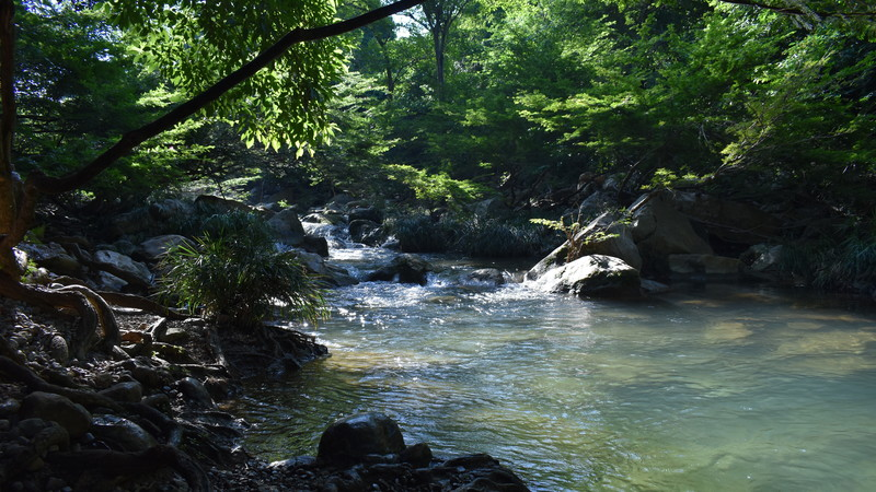 Laudato Si' week: Water is the source of life
